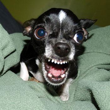 агрессивность собак