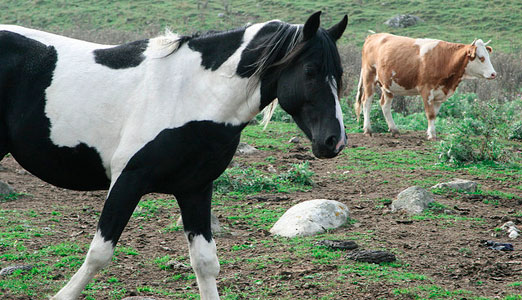 корова и лошадь