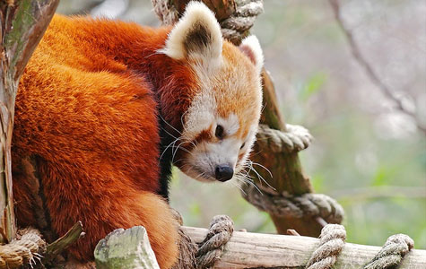 Красная книга охрана живой природы