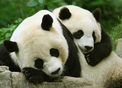 Защита животных от вымирания