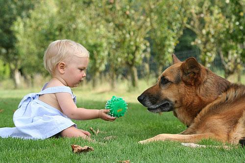 Какую собаку завести в семью с детьми