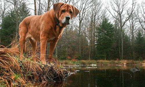 Как достать клеща из тела собаки