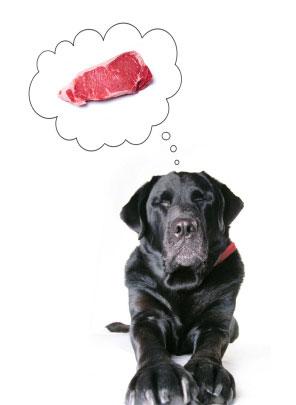 корма для собак премиум