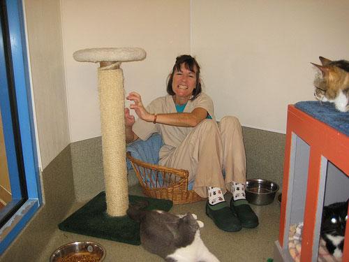 кошка портит мебель