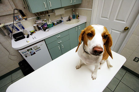 Ветеринарная медицина