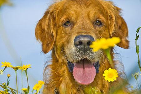 чистка собак шерсть