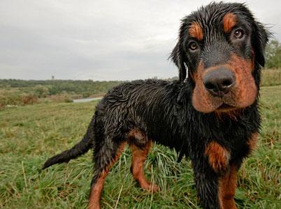 отучить собаку от вредных привычек
