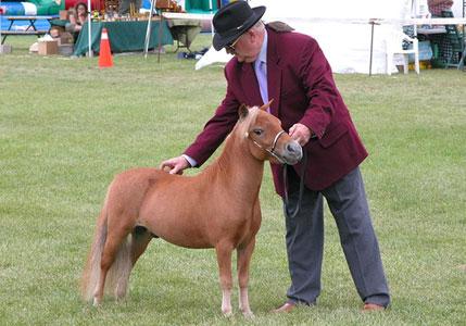 Фалабелла маленькая лошадка лошадь