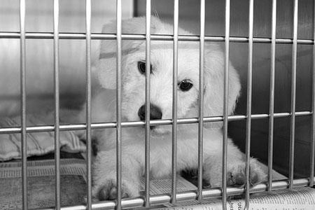 Помощь бездомные животные