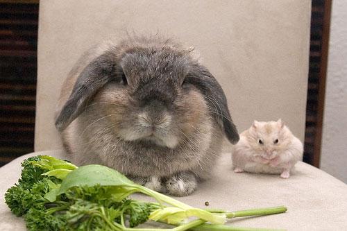 хомяк кролик грузуны