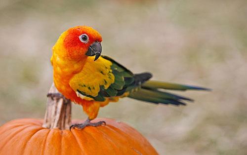Транспортировка попугая