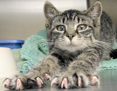 стричь когти котам и кошкам