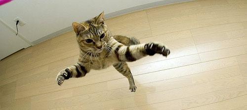 когти кошек котов