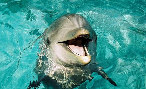 Дельфины разумные морские животные