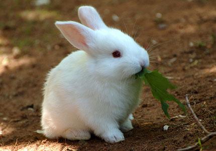 Уход и кормление кролика