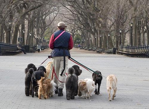Выгуливание собак