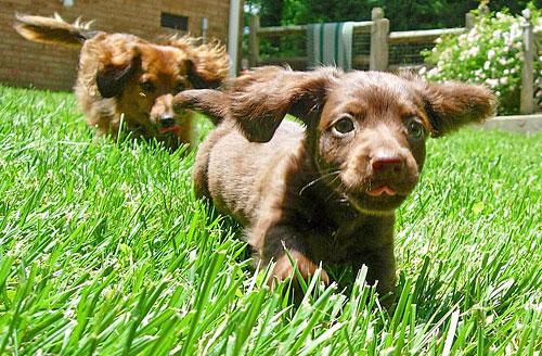 продолжительность жизни собаки