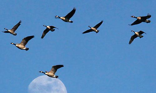 птицы перми фото и птица подмосковья с хохолком.