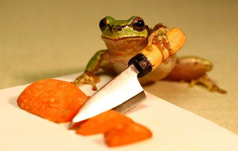 Лягушка добывает еду