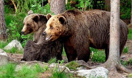 Всеядные медведи
