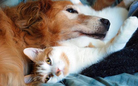 Вывести блох кошки собаки