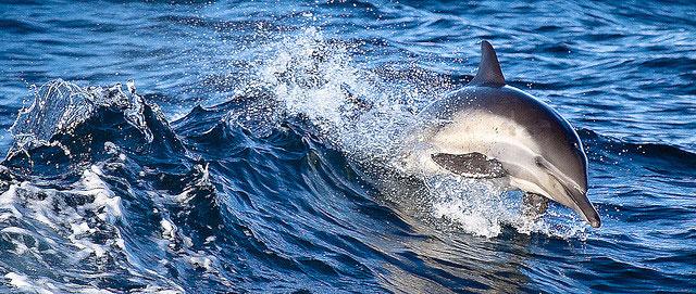 Дельфины самые умные животные