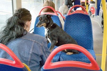 Поездка с собакой в транспорте