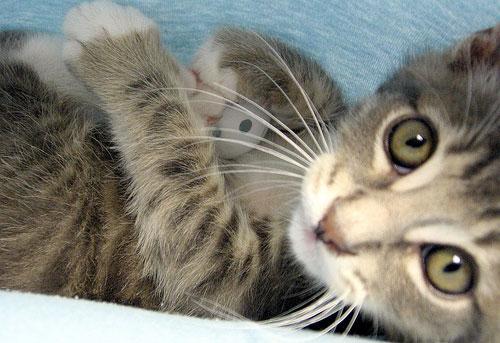 котенок кошка