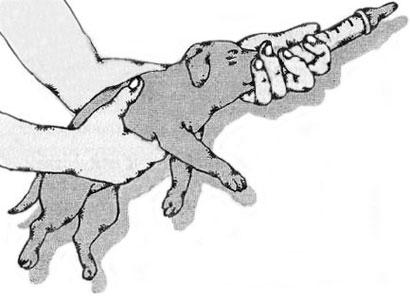 вскармливание щенков