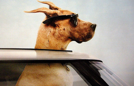 необходимые документы для животных